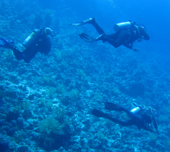 Scuba Diving Trip to Gozo 2020