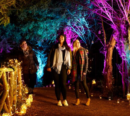 Centenary Event | Enchanted Audley End 16 Dec