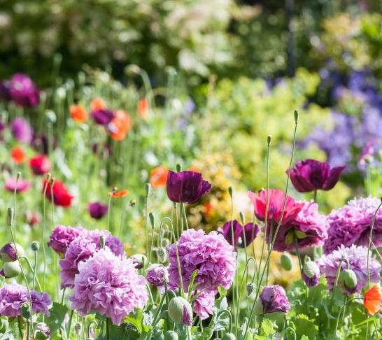 Cornwall Area | Cornwall Garden Society Spring Flower Show 2020