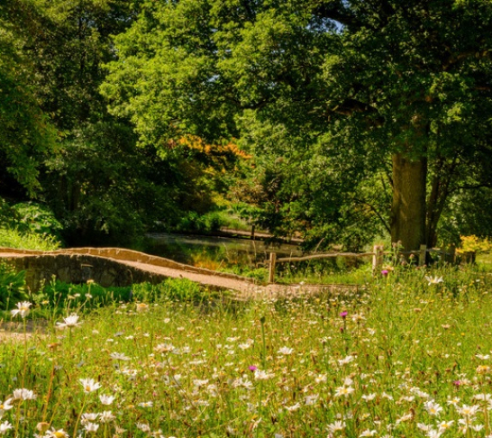 Centenary Event | Wild Food Walks for Kew at Wakehurst