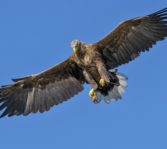 East Kent | VIP Activity Day at Eagle Heights Wildlife Foundation