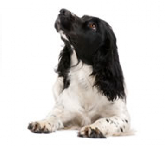 Oxford Area | All About Dogs